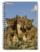 Gray Wolf And Cubs Spiral Notebook