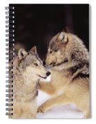 Gray Wolves Spiral Notebook