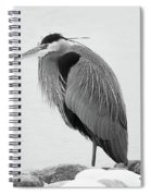 Great Blue Heron Hunting Spiral Notebook