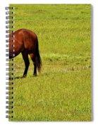 Horse Grazing Spiral Notebook