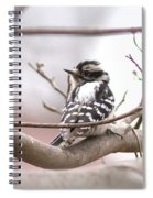 Img_0001 - Downy Woodpecker Spiral Notebook