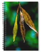 3 Leaves Spiral Notebook
