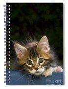 Maine Coon Kitten Spiral Notebook