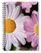 Marguerite Daisy Named Petite Pink Spiral Notebook