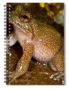 Mehu�n Green Frog Spiral Notebook
