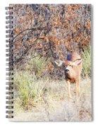 Mule Deer Doe Spiral Notebook