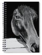 Noble Stallion  Spiral Notebook