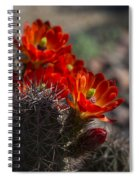 Red Hot Hedgehog  Spiral Notebook