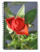 Red Rose Blooming Spiral Notebook