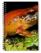 Rosy Ground Frog Spiral Notebook
