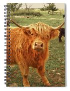 Scottish Highlander With Big Bangs Spiral Notebook