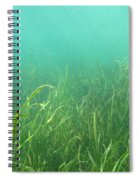 Shallow Freshwater Lake Spiral Notebook