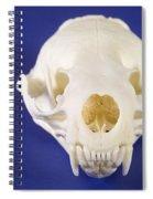Skull Of A River Otter Spiral Notebook