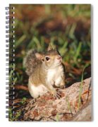 3- Squirrel Spiral Notebook