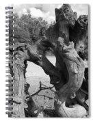 Twisted Driftwood Spiral Notebook