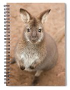 Wallaby Outside By Itself Spiral Notebook