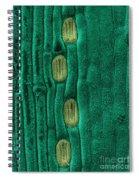 Wheat Leaf Stomata, Sem Spiral Notebook