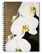 3 White Orchids Spiral Notebook