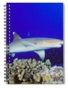 Whitetip Reef Shark Spiral Notebook