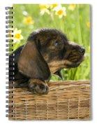 Wire-haired Dachshund Puppy Spiral Notebook