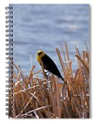 Yellow Headed Blackbird Spiral Notebook