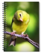 3008 - Goldfinch Spiral Notebook