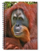 31- Orangutan Spiral Notebook