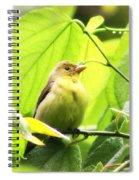 3154 - Tanager Spiral Notebook
