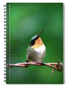 3531 - Ruby-throated Hummingbird Spiral Notebook