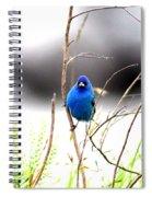3553-015 - Indigo Bunting Spiral Notebook