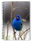3553-16 - Indigo Bunting Spiral Notebook