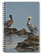 37-  Pelicans Spiral Notebook