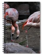 3's Company Spiral Notebook