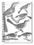 American Ornithology Spiral Notebook