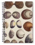 Aquatic Animals - Seafood - Shells - Mussels Spiral Notebook