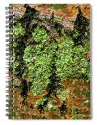 Aspen Bark After The Rain Spiral Notebook