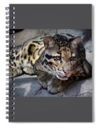 Clouded Leopard Spiral Notebook