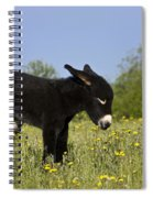 Donkey Foal Spiral Notebook