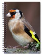 European Goldfinch Bird Close Up   Spiral Notebook