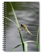 Four-spotted Chaser Spiral Notebook