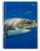 Great White Shark Spiral Notebook