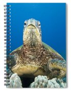 Hawaii, Green Sea Turtle Spiral Notebook