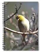 Img_0001 - American Goldfinch Spiral Notebook