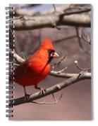 Img_0001 - Northern Cardinal Spiral Notebook