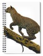 Leopard Panthera Pardus Climbing Spiral Notebook
