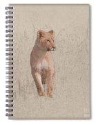 lioness Masai Mara, Kenya Spiral Notebook