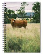 Longhorn Cow In The Paddock Spiral Notebook