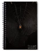 Marbled Orb Weaver Spider Spiral Notebook