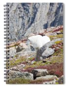 Mountain Goats On Mount Bierstadt In The Arapahoe National Fores Spiral Notebook