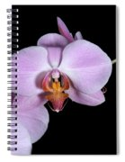 Pink Orchid IIi Spiral Notebook